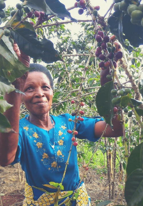 Marie Bedabasingwa auf ihrer Kaffeeplantage