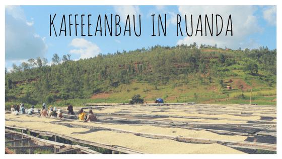 Kaffeeanbau in Ruanda: Ein Paradies für Spezialitätenkaffee