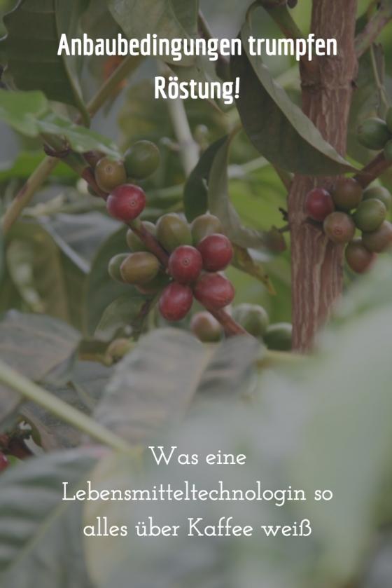 #Lilith berichtet: Was eine Lebensmitteltechnologin so alles über Kaffee weiß