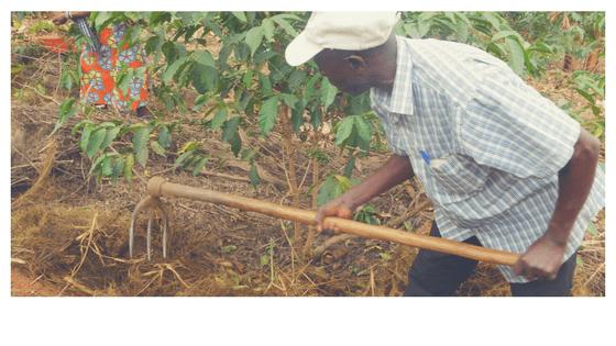 Kaffee Kooperative andrew dung