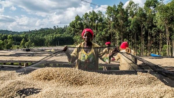 Kaffee Kooperative jobs mit nachhaltigkeit maraba